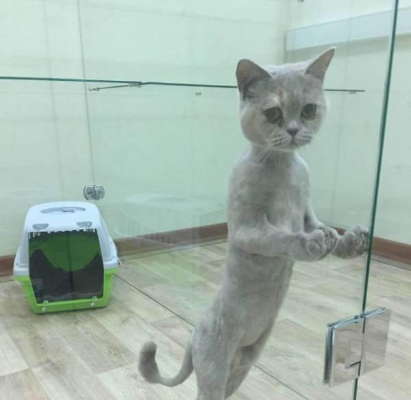 Зачем кошке стрижка?