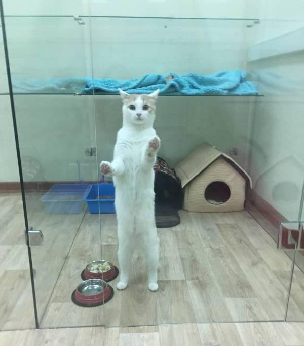 Почему кошкам нельзя собачий корм, а собакам – кошачий