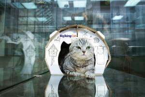 Отель для кошек отзывы