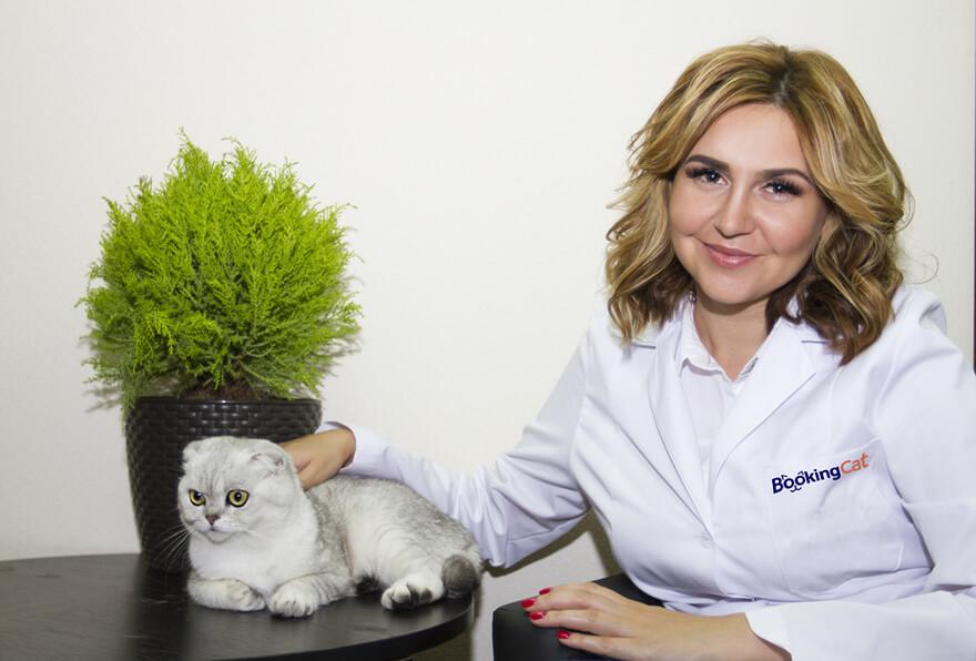 франшиза гостиницы для животных Booking Cat - истории успеха