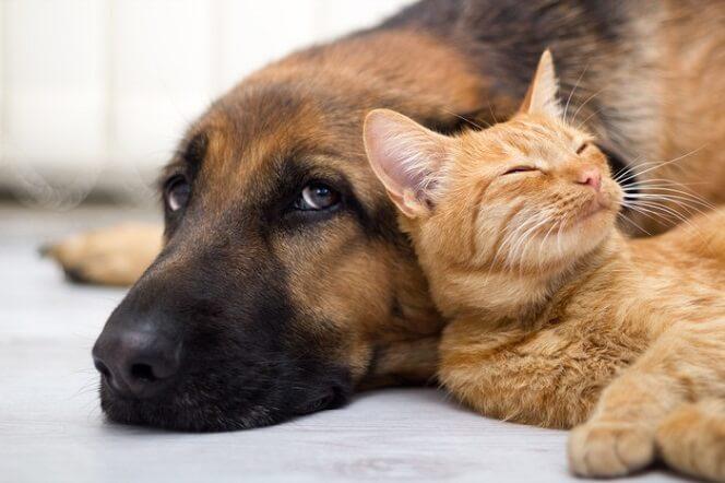 условия передержки собак и кошек