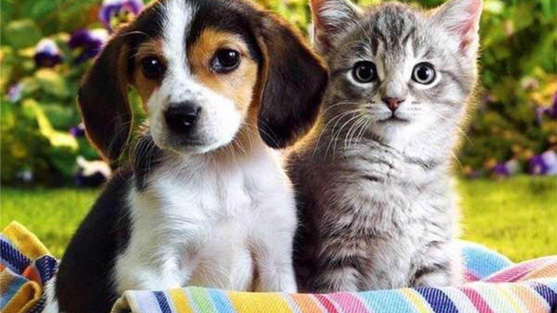 Минусы домашней передержки животных