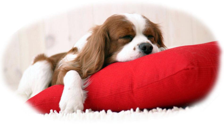 Каждый имеет право отдохнуть