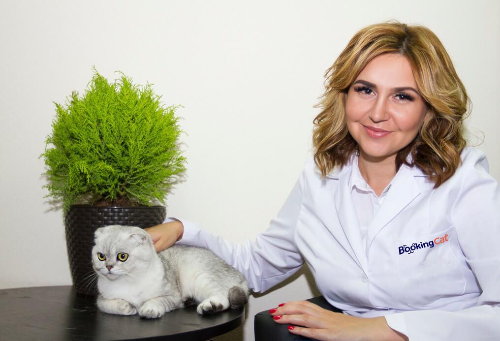 Сколько стоит разводить породистых кошек в России