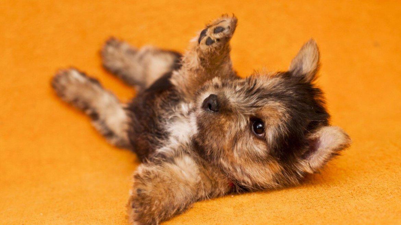 Особенности передержки щенков