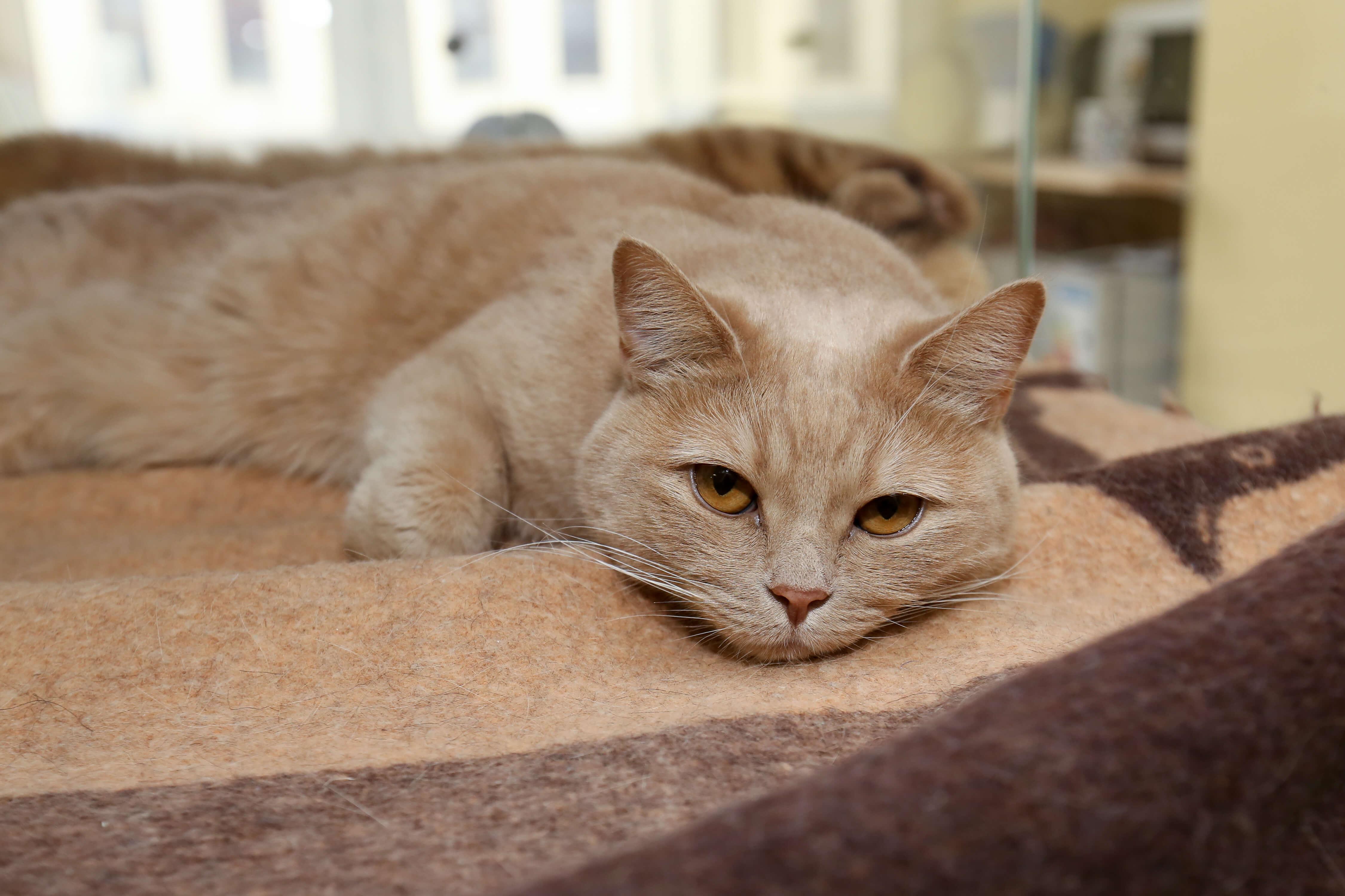 передержка кота на время отпуска