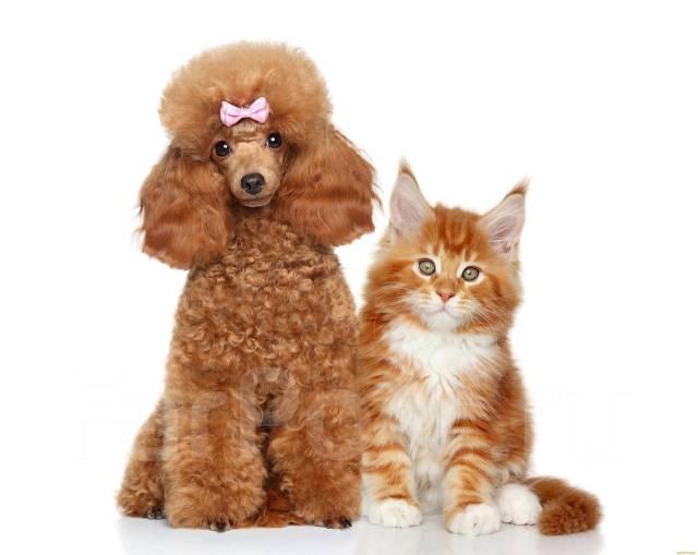 Груминг Краснодар или стрижка кошки/собаки Краснодар