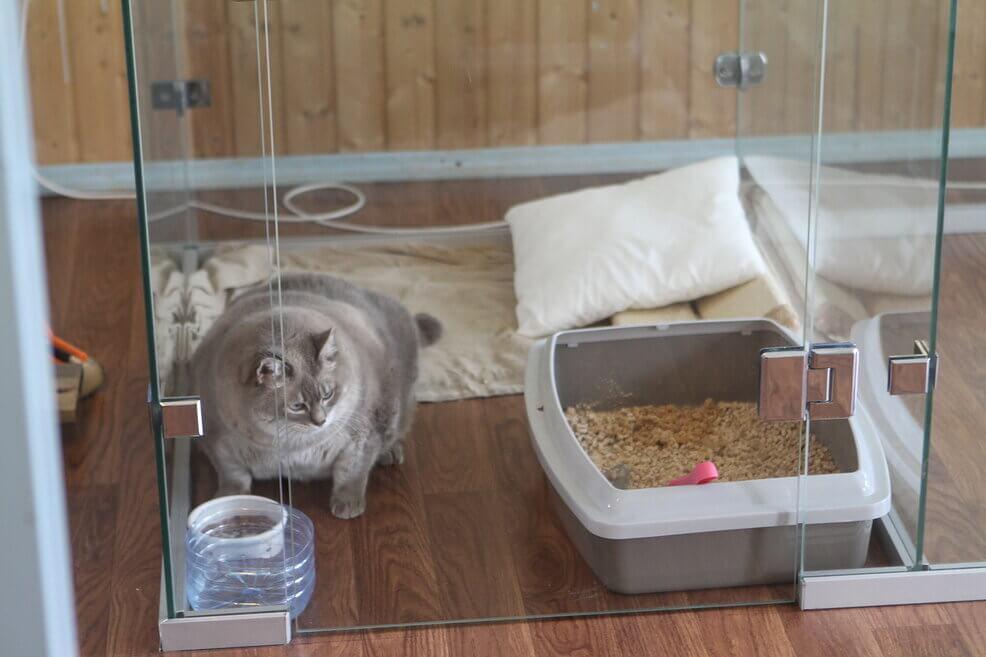 кот в номере зооотеля
