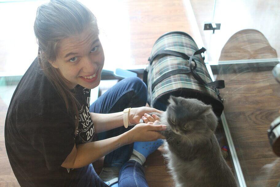 поселение кошки в отель