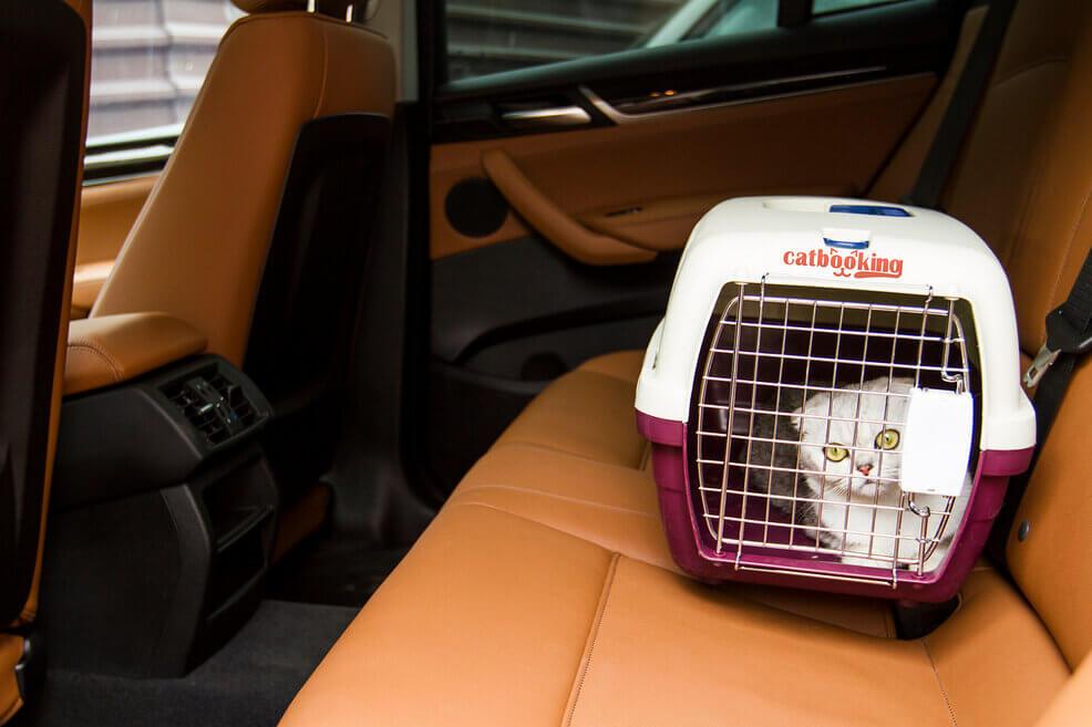 услуги по перевозке животных