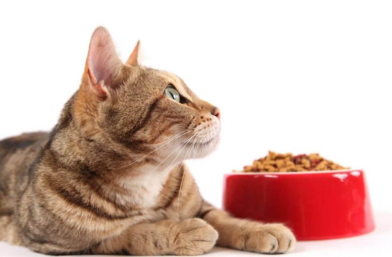 правильное питание для кошек
