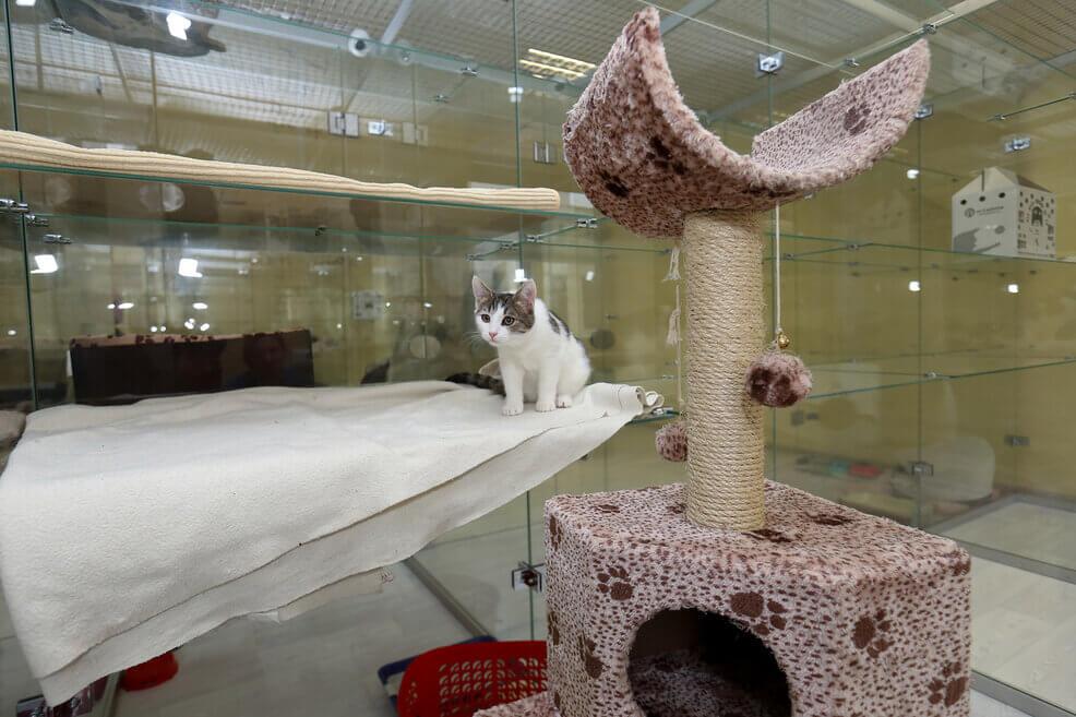 отдать кошку на передержку в зоогостиницу