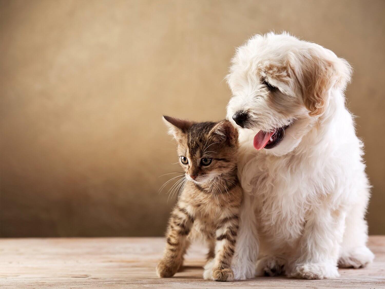 груминг собак и кошек в краснодаре