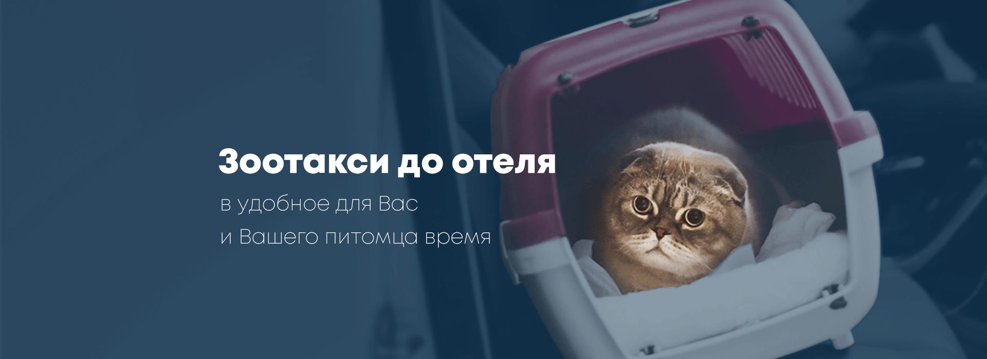 Зоотакси до отеля для животных BookingCat