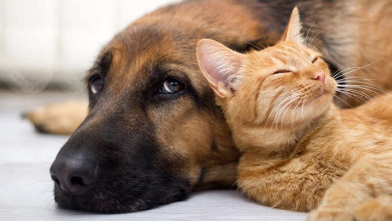 Зоогостиница собаки кошки