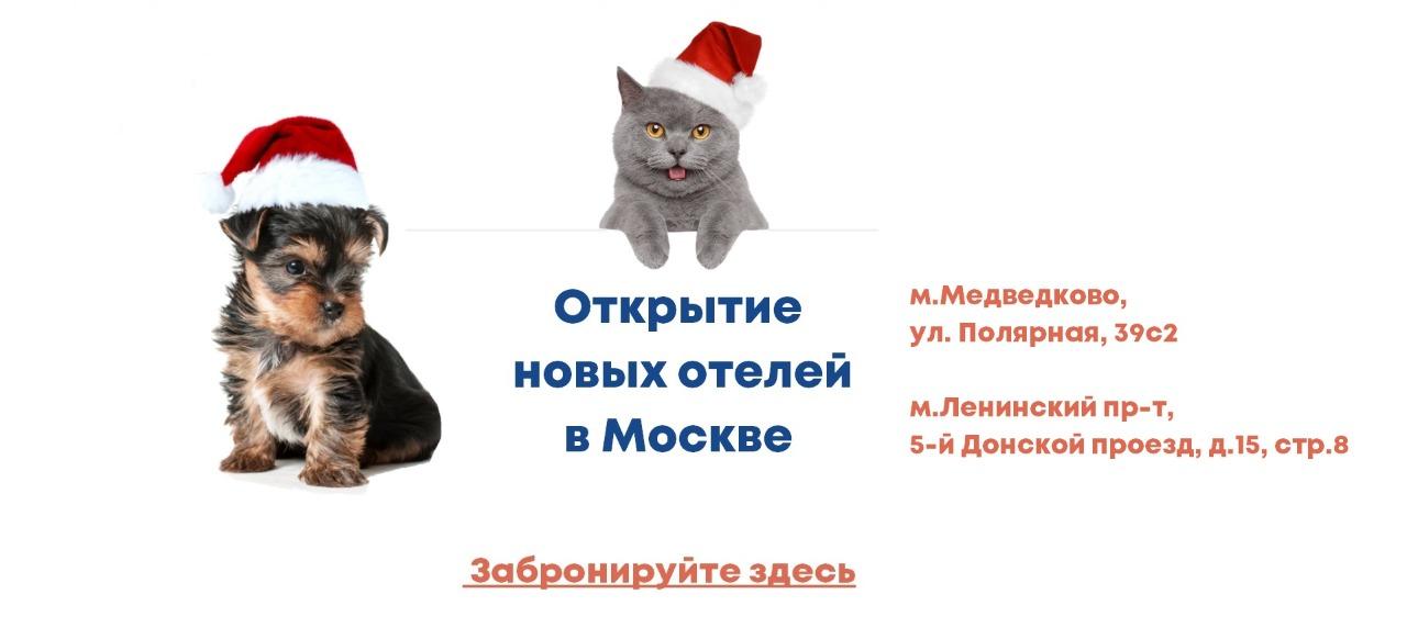 WhatsApp Image 2020-12-28 at 16.27.50